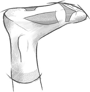 Anatomía del pie